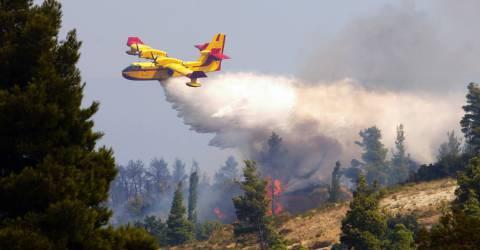 Blusvliegtuig blust bosbrand